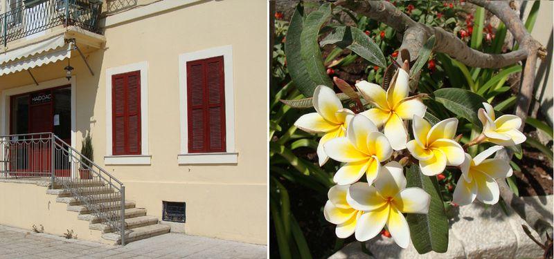 Haifa German Colony Hotel+tropical flowers