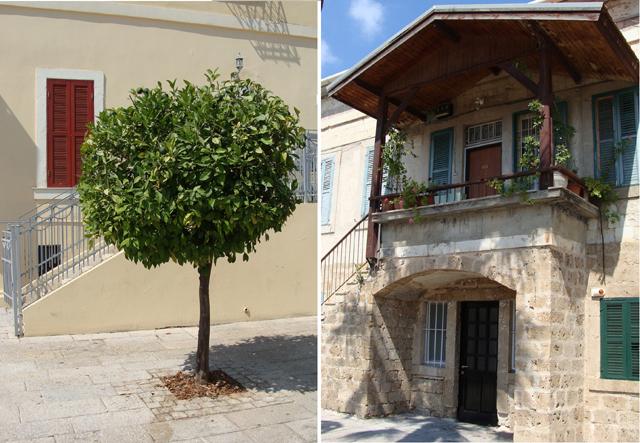Haifa German Colony Pruned Tree+House