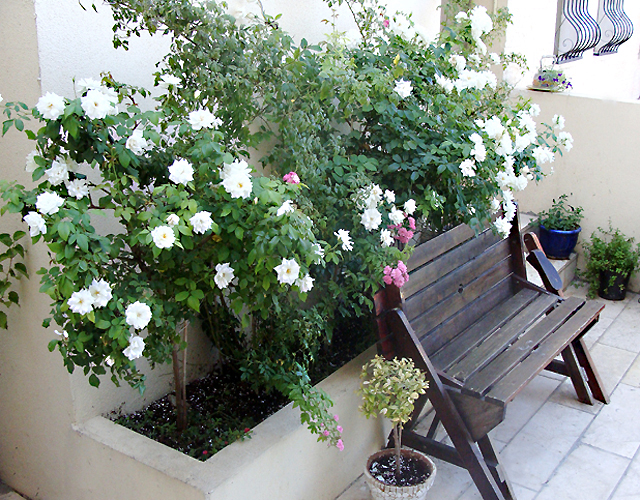 Container Garden Sept Seating