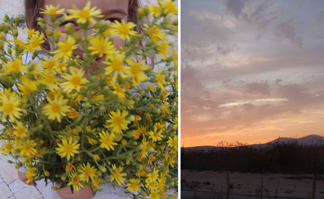 Fall Walk Sunset and Flowers
