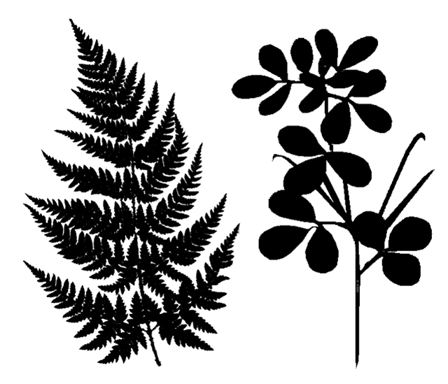 Nature Silhouettes Fern+Leaves