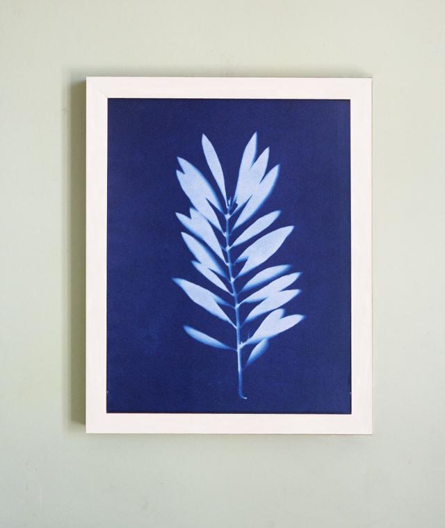 Sunprint Olive Branch