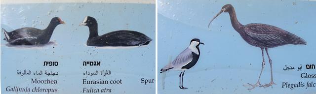 Hula Lake Bird Drawings