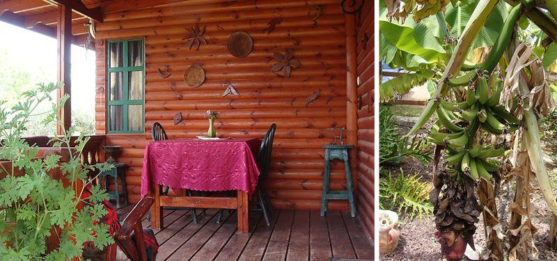 Nahariya Lemen Cabin + Bananas