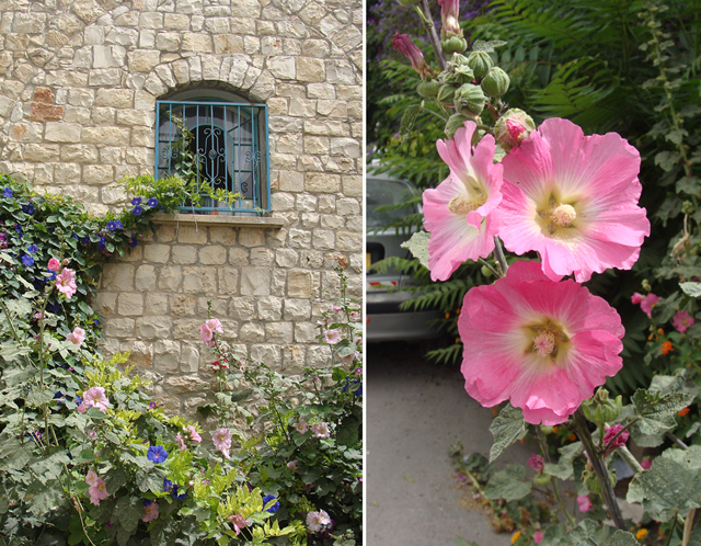 Hollyhock, vines on House