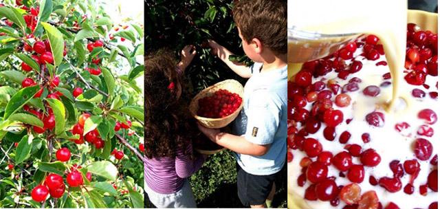 Cherry picking +dessert