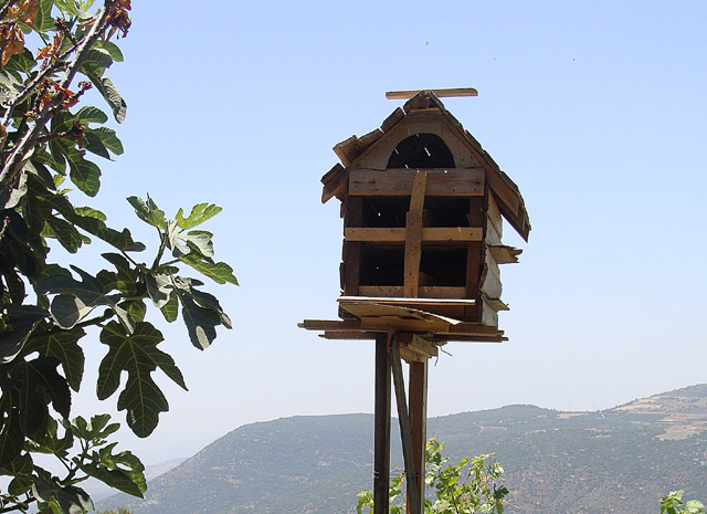 Bird House With A View