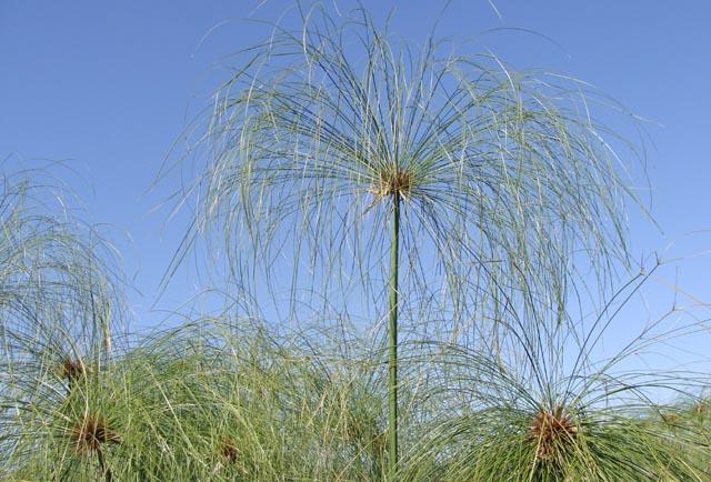 Hula Nature Reserve Fall Grasses