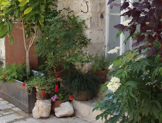Container Gardening Creative 3