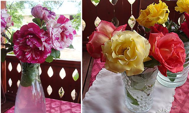 Nahariya Lemen roses
