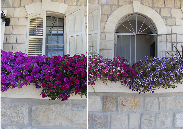 Container Gardening Wall flowers Views