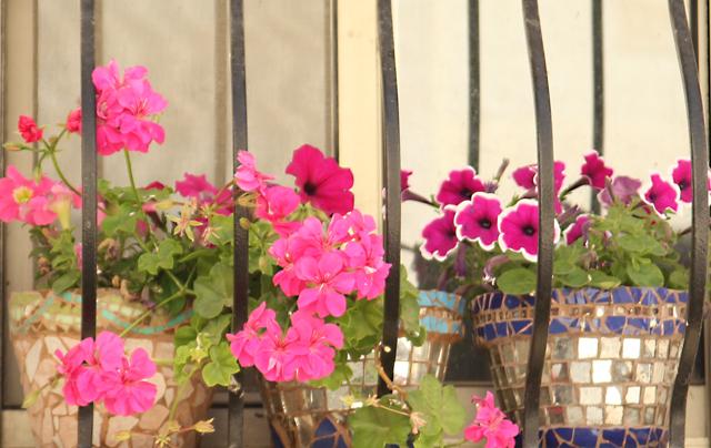 Container Gardening Window Box Summer Blooms