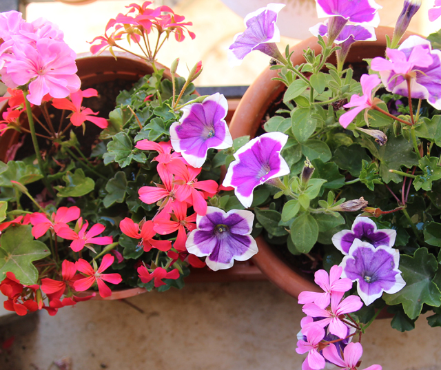 Container gardening window box gardening