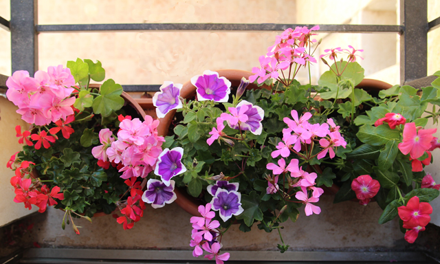 Container Gardening-Summer Blooms