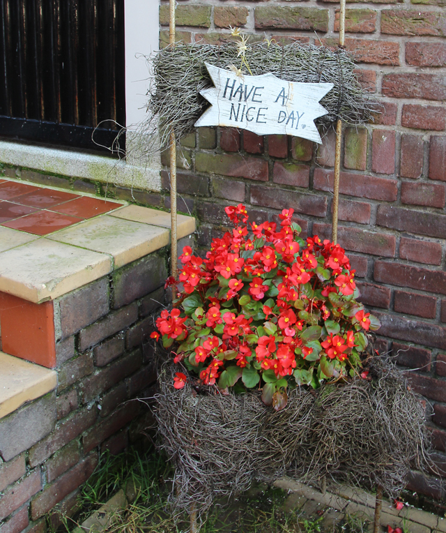 Container Gardening in holland begonias