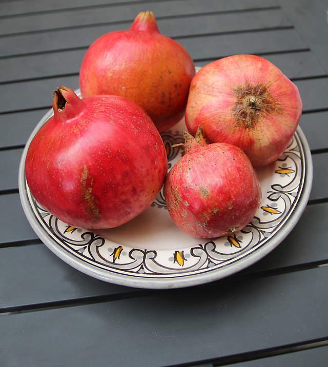 Pomegranites in Israel