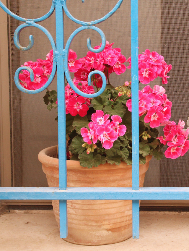 Geraniums in old city window