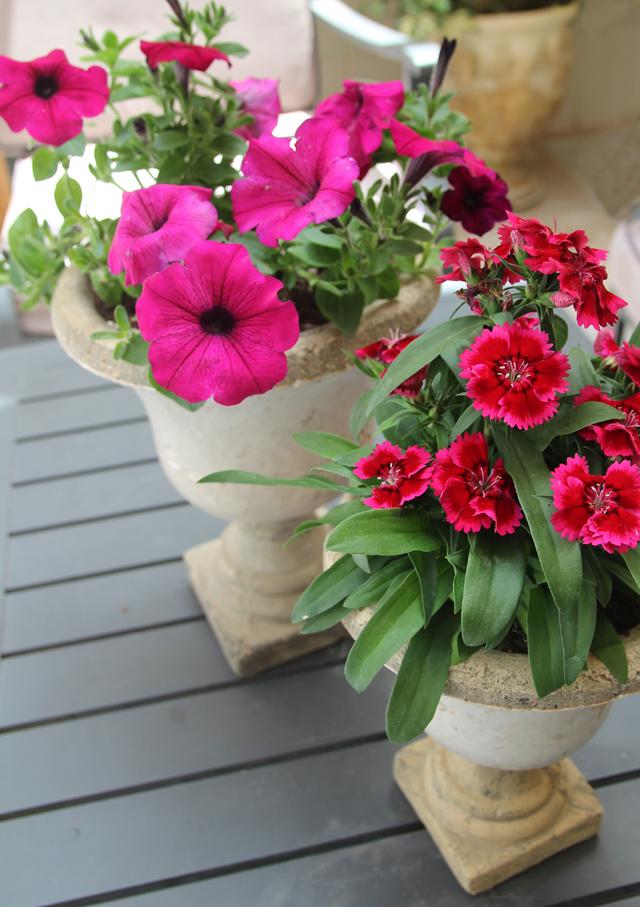 Container Gardening Petunias