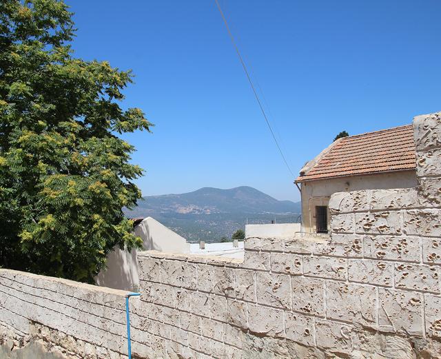 Grapevine, across the path, meron view