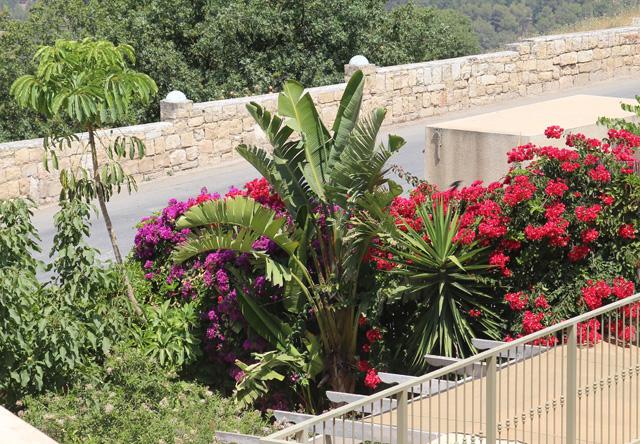 Gardening Neighbor's Bouganvilla close up