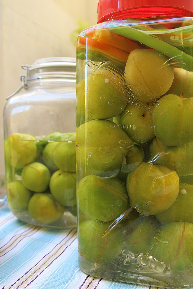Moroccan pickled green plums