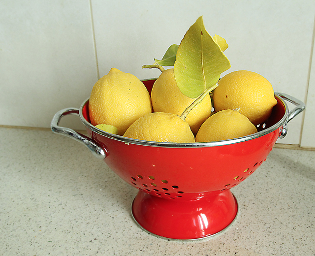 Container Grown Lemons in Red Colander