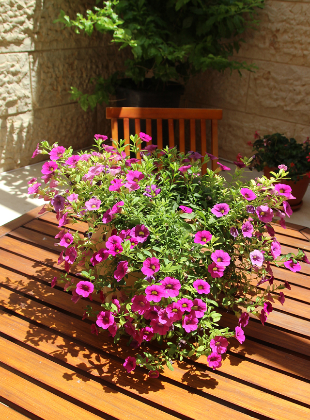 Container gardening kalatea