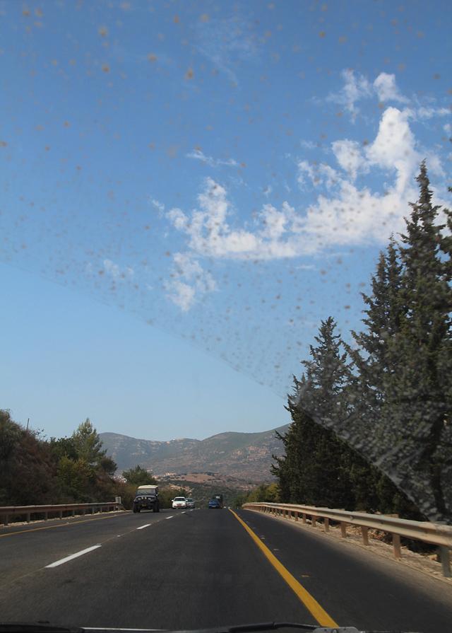 Israel Galil forest