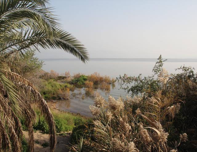 Kinneret Sea of Galilea Shore