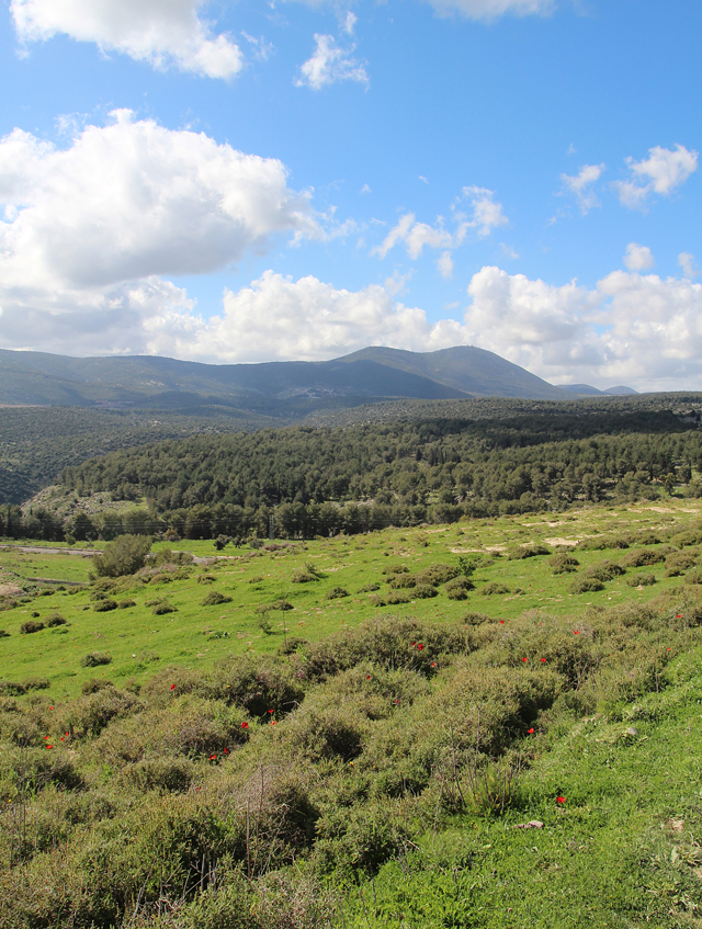 Walk through the meadow, with Mt. Meron view