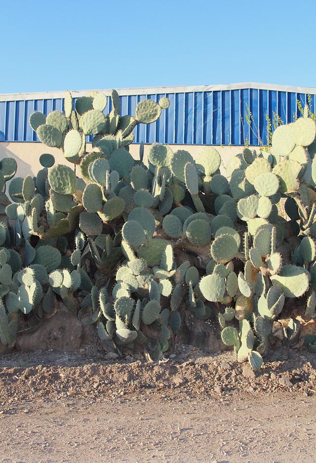Mount tabor devorat hatavor cactus