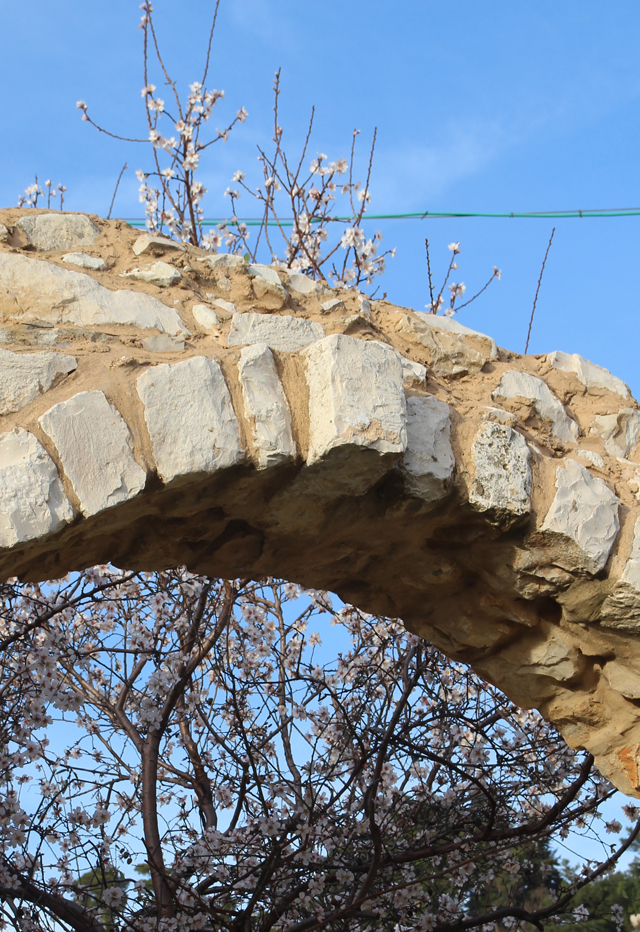 Almond Tree in bloom with stone arch