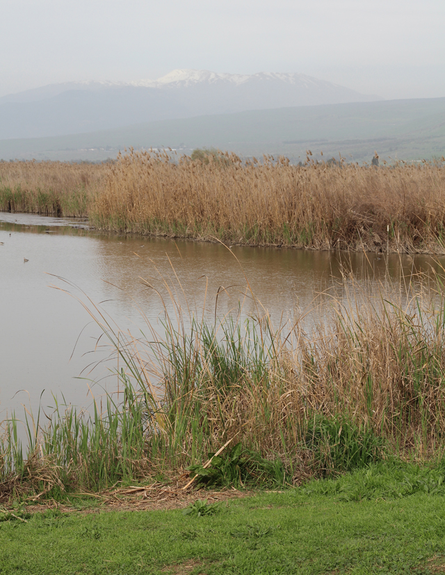 Hula Valley Lake with view of Mt. Hermon
