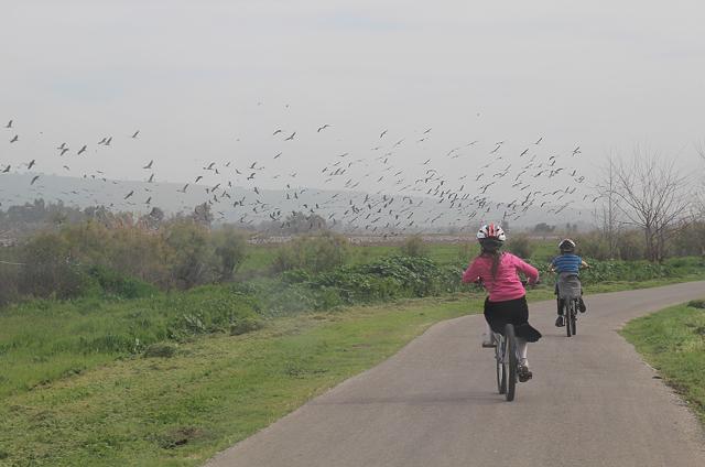 Hula Valley Cranes and Bike Ride