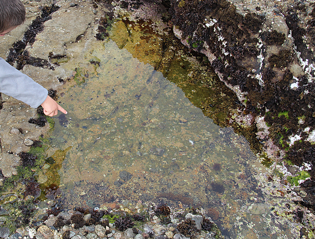 Point Lobos Tide Pools
