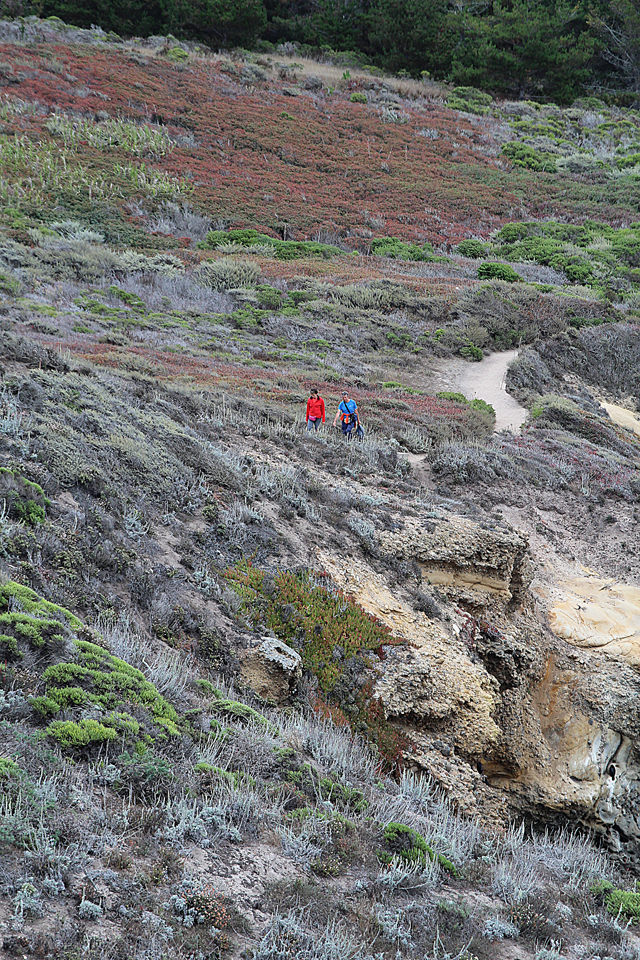 Point Lobos Trails