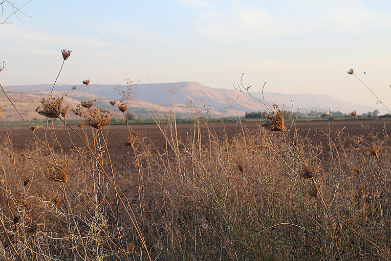 Golan Heights Field With Mountains