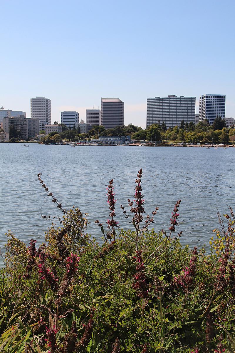 Lake Merrit Looking Towards Downtown