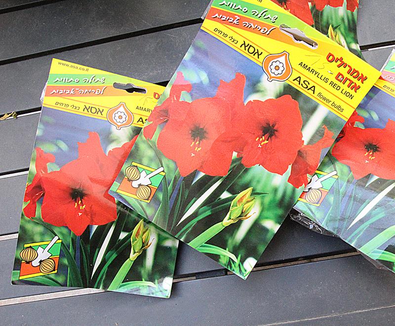 Amaryllis packaging