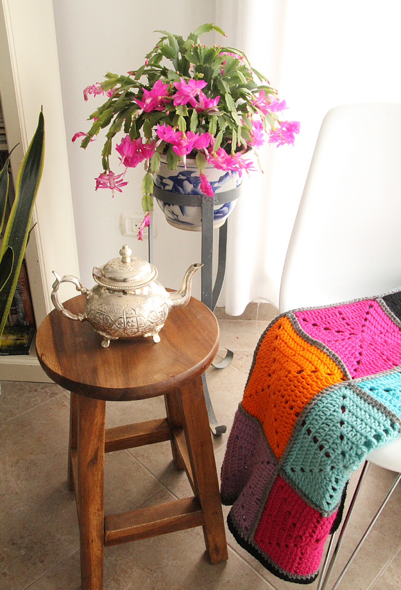 Schlumbergera with teapot and starburst blanket