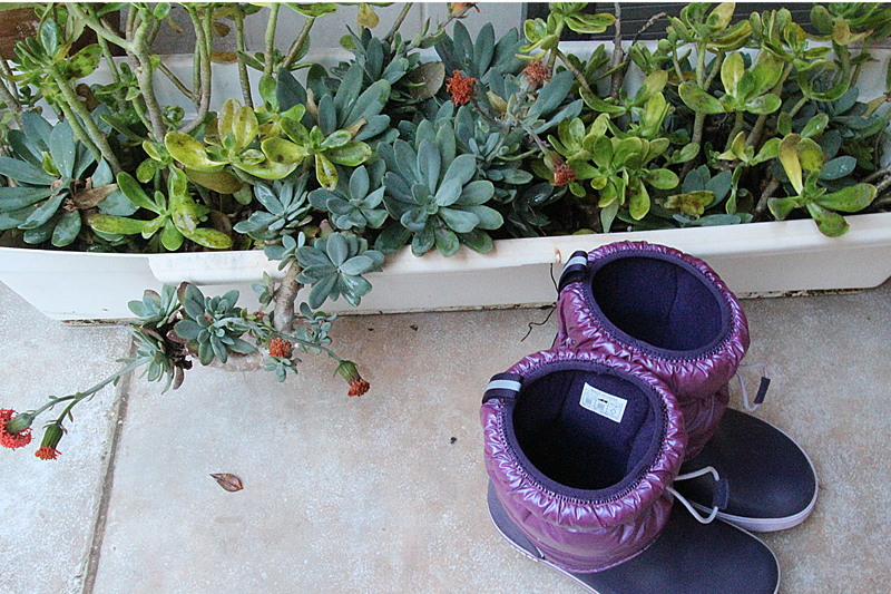Container Gardening Winter Changes Oribe Gorge
