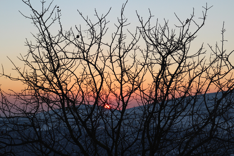 Snow Tree Silhouette With Sunset