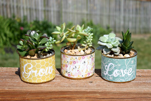 Succulent cans with contact paper