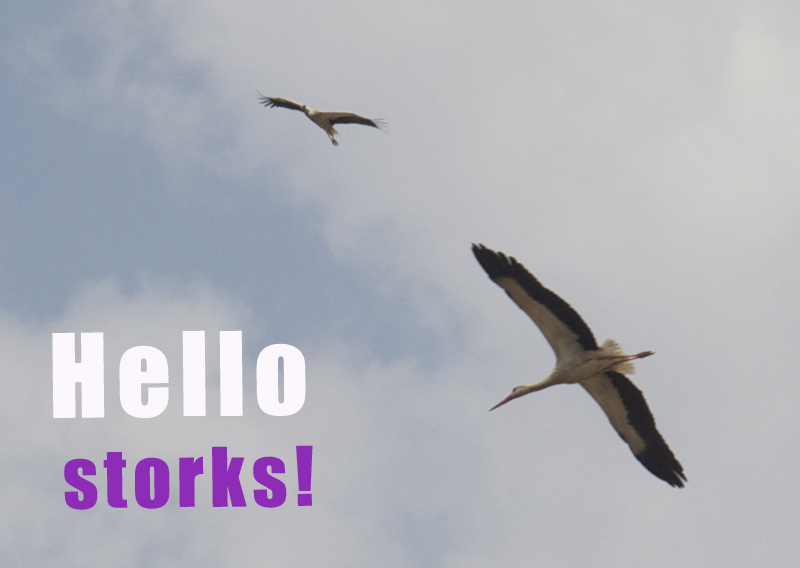 Storks,hello