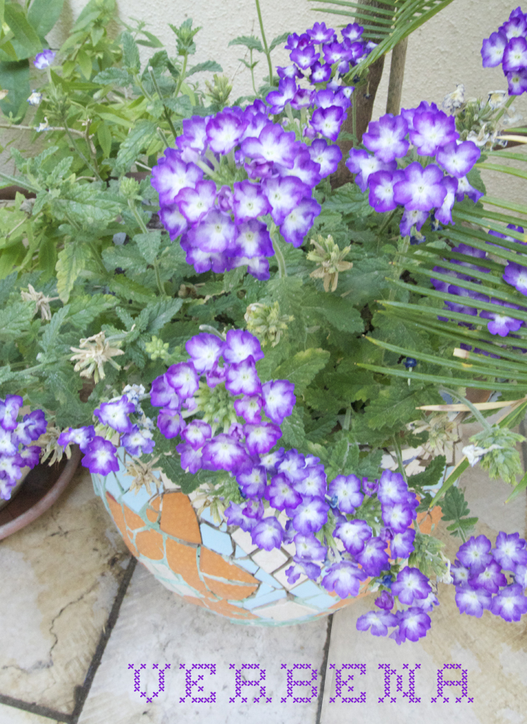 Container Gardening June 2014 verbena