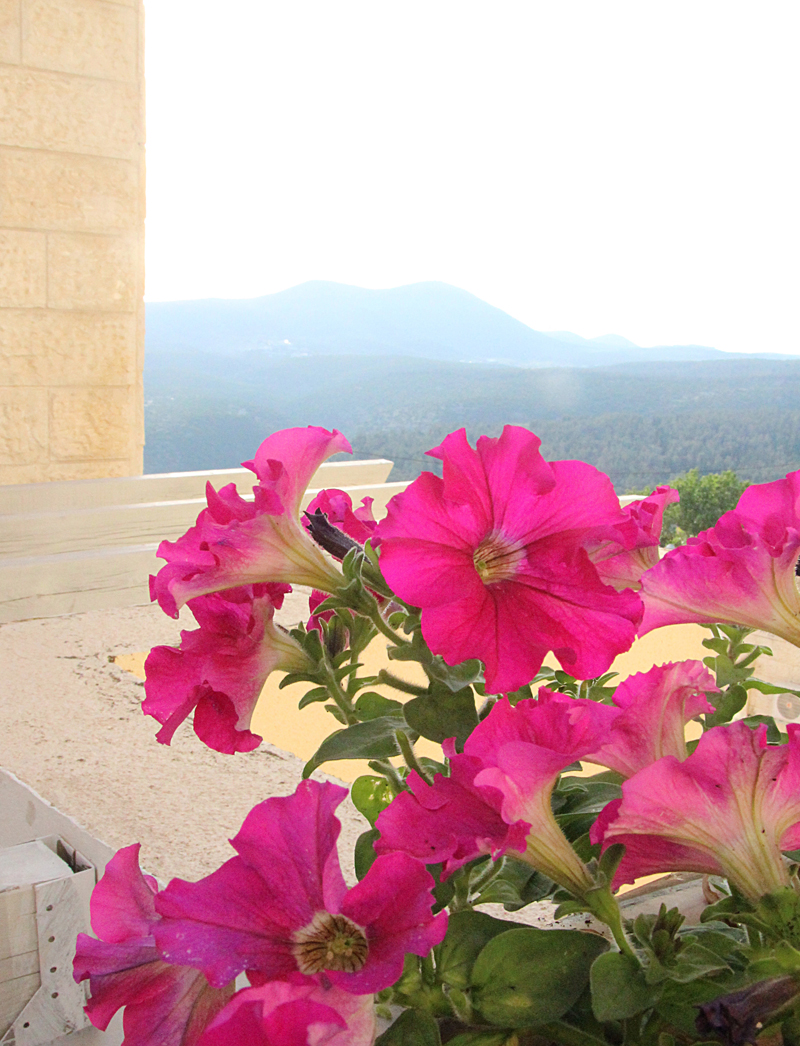 Petunias With View Of Meron