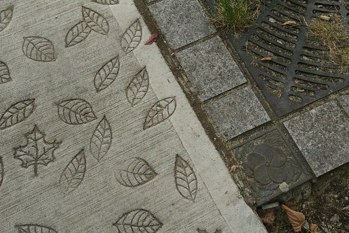 Vancouver Stamped Leaves in Concrete Sidewalk