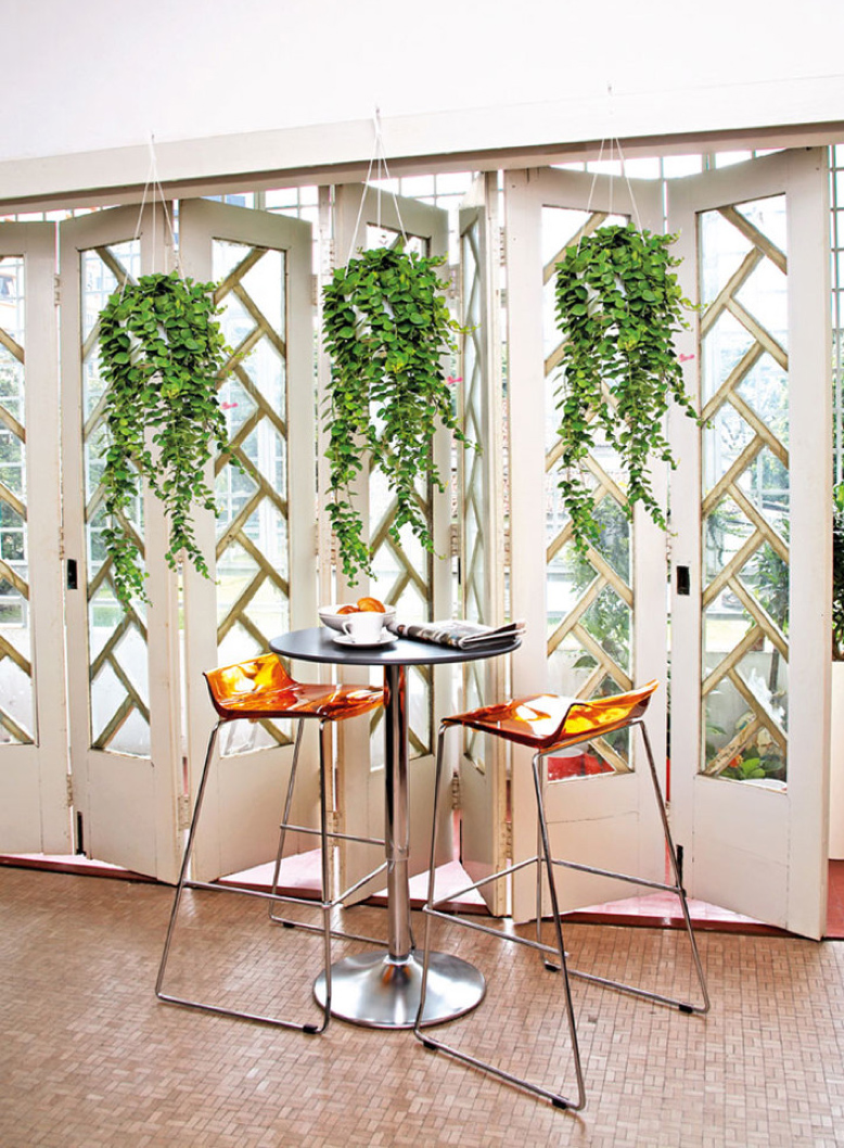 Plants As Props For Party Decor hanging hoya