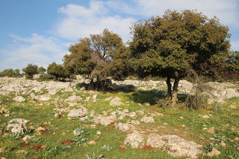 Israel Vacation Dalton, Hike to Yehuda Ben Taima