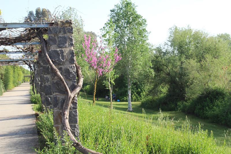 Jordan River bank park pergola with grape vine